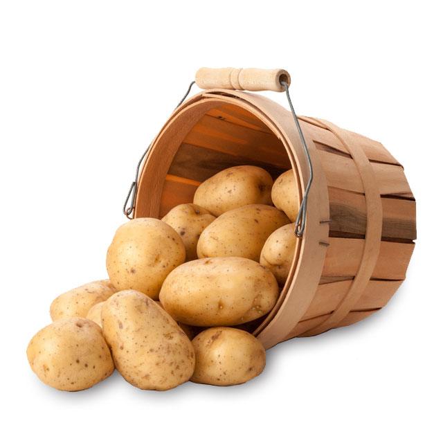 土豆马铃薯洋芋5斤装