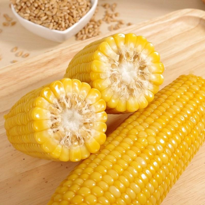 黄糯玉米真空包装10根